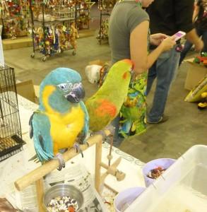 bird-show-in-tucson